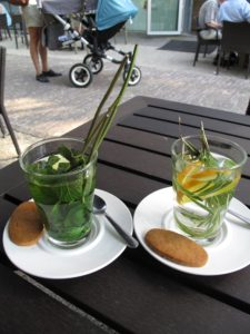 botanical-garden-of-leiden2