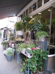 gerdas-bloemen-en-planten