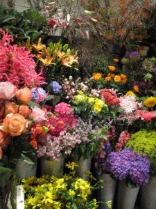 gerdas-bloemen-en-planten2