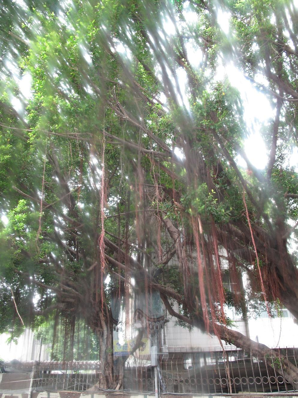 台北の植物