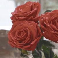 プロポーズの赤いバラ リアレンジ例