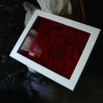 108本の薔薇の保存